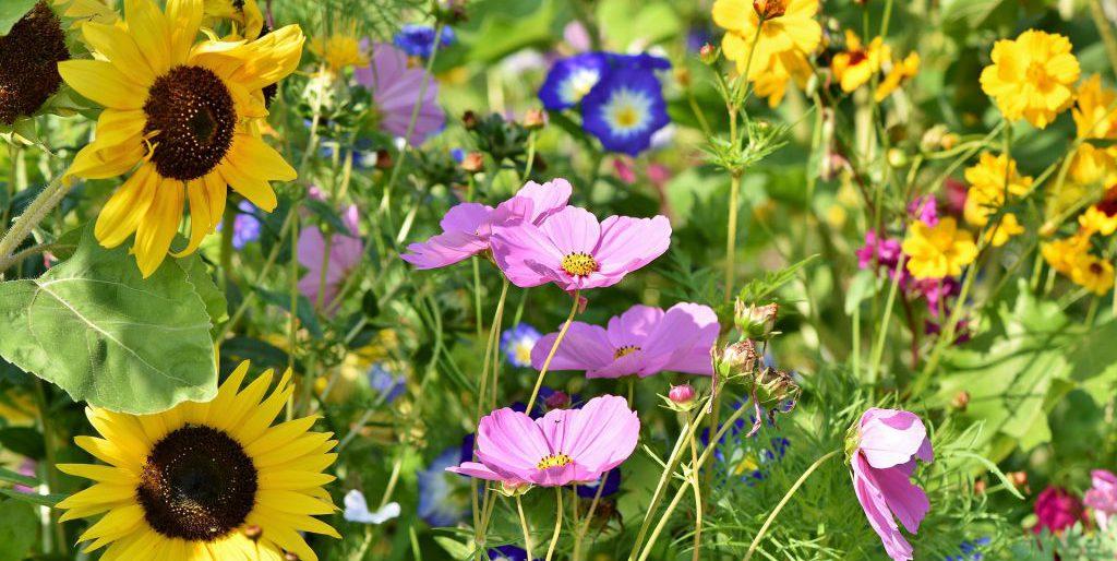 Permalink auf:Blühwiesen Patenschaft